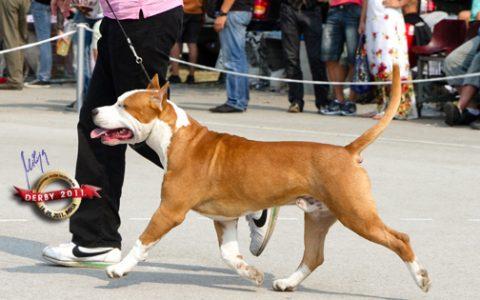 derby_2011_20120205_1322643798